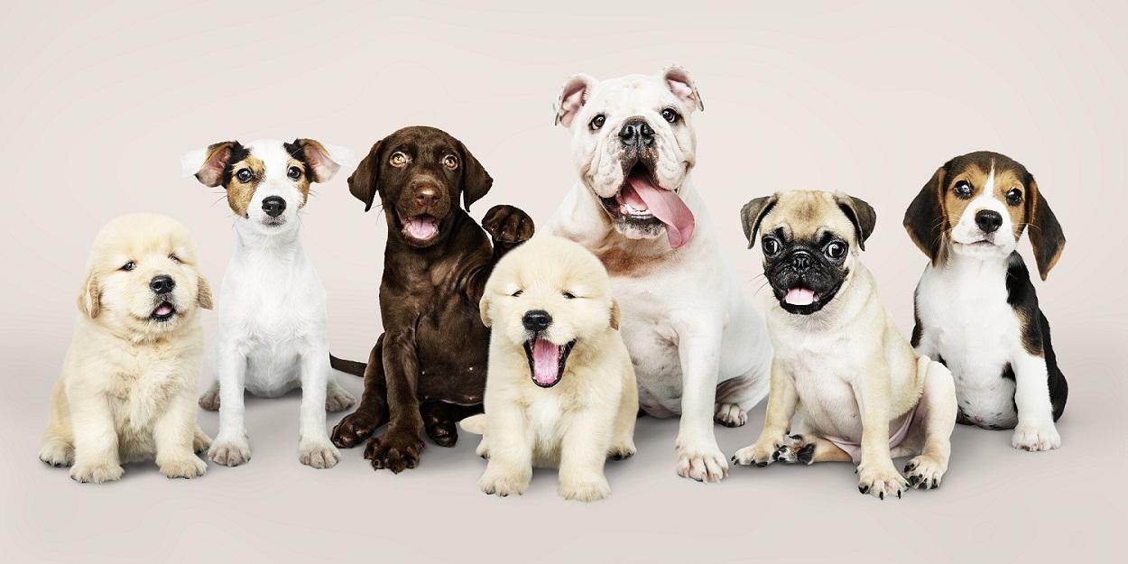 Dicas para manter a casa segura para os seus pets, Lidercon Consórcios